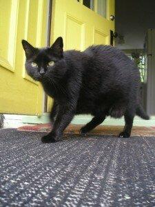 Pauline the black cat!