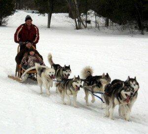 Dog team pulling sled on Brome Lake.