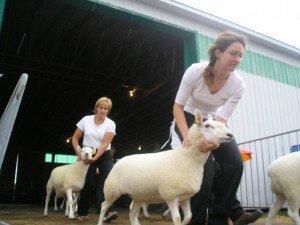 Sheep Show!